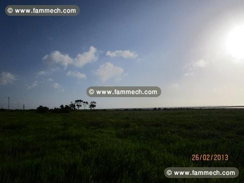 Immobilier tunisie terrain vendre el mida bonne affaire terrain - Vendre un terrain en indivision ...