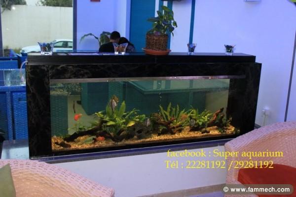 décoration aquarium tunisie