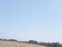أراضي على بحر في كركوان 100 د.ت/متر أكهو فرصة !!!
