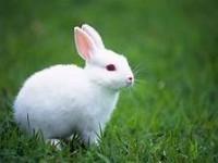 10 أرانب