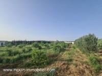 Ferme Lara T952 Hammamet