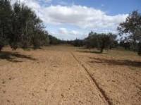 terrain 4812m² a aousja sur la route ras jebel