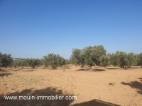 TERRAIN OPERAL Hammamet Sud T767